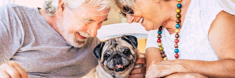 Mit unserem Futter-Konfigurator Hundefutter individuell...