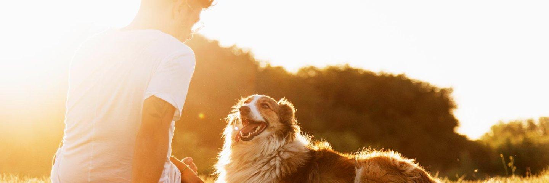 Hildegards Vitalkost ist Schonkost für deinen Hund
