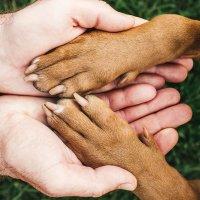 Gesundheitsberatung Hund | Katze
