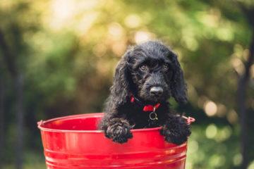 BARF Hund Puppy